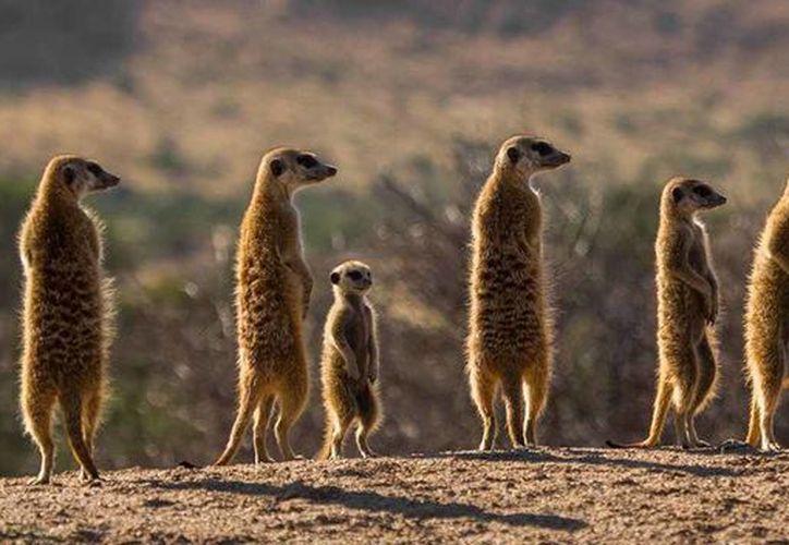 Los investigadores analizaron más de cuatro millones de casos de muertes entre distintas especies. (apex-expeditions.com)