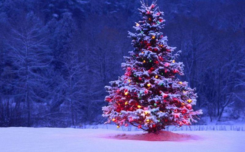 Cómo escoger mi árbol de Navidad | Noticias de México y el Mundo