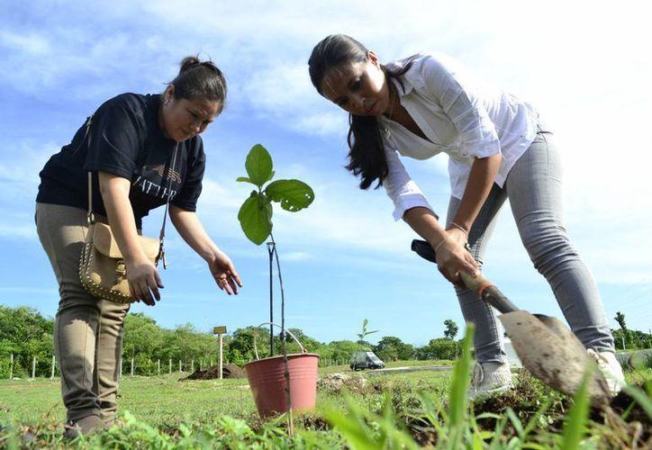 Consideran necesario crear un plan de rescate ambiental. Imagen de dos mujeres mientras siembran un árbol en el Paseo Verde. (Milenio Novedades)