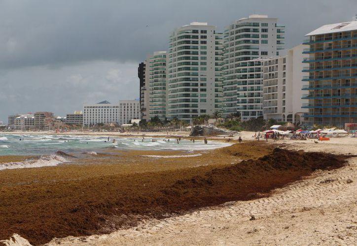 El arribo masivo del sargazo ha dejado mala imagen al destino turístico. (Paola Chiomante/SIPSE)
