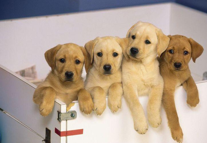 Los perritos podrán disfrutar del spa de Animal House con descuentos. (Foto: Contexto)