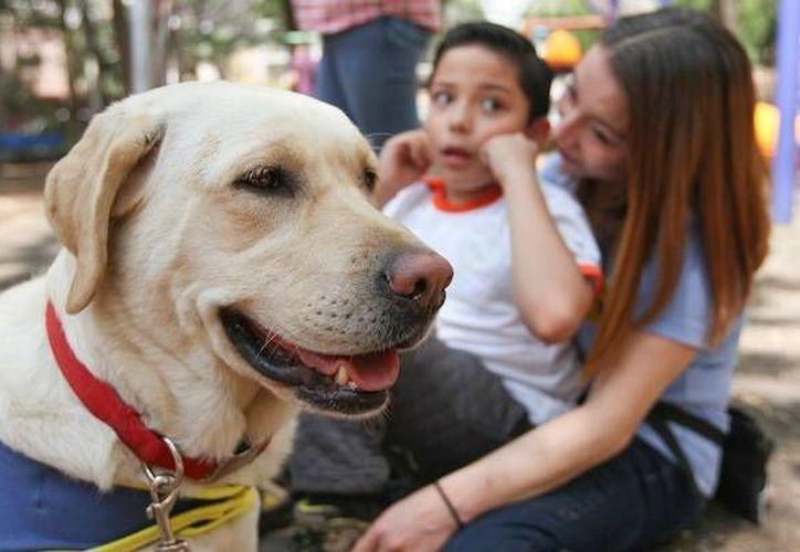 ADPA, de la mano de Rosalinda Figueroa, atiende a 150 perros y alimenta a 60 callejeros más. (Contexto/Internet)