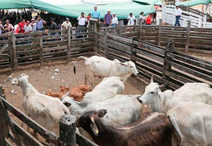 Expertos de Yucatán instruyen a personal de Agricultura de Estados Unidos sobre cómo prevenir la rabia paralítica bovina, enfermedad transmitida por la especie 'desmodus rotundus' o murciélago vampiro. La imagen es de contexto. (Milenio Novedades/Archivo)