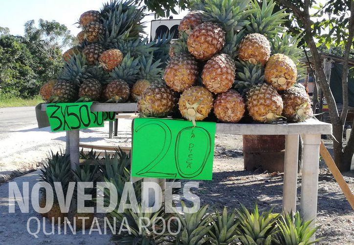 Se busca que en tres años, el cultivo de la piña sea un proyecto autosustentable. (Javier Ortiz/SIPSE)