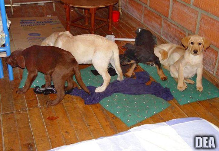 Un veterinario colombiano que usaba perros para traficar droga fue sentenciado a seis años de cárcel en Estados Unidos. (AP)