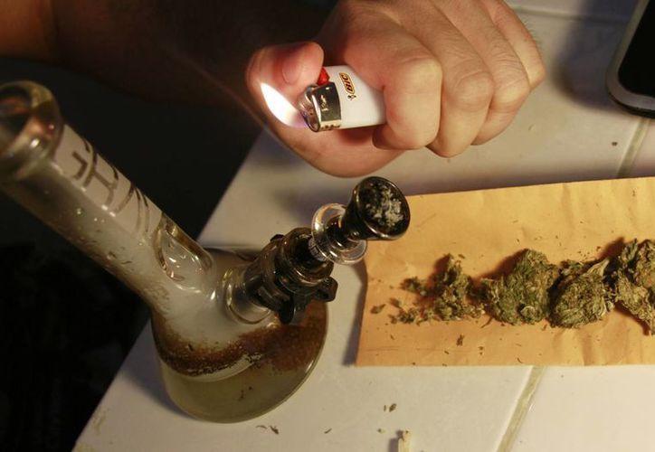 El decreto permite que se expidan licencias para la posesión de semillas de cannabis. (Luis Soto/SIPSE)