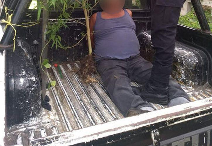 El anciano detenido y su planta de droga. (SIPSE)