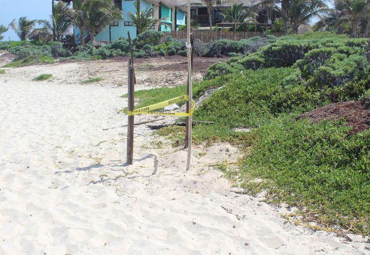 Ayer una tortuga anidó en las arenas del hotel Papaya Playa. (Sara Cauich/SIPSE)