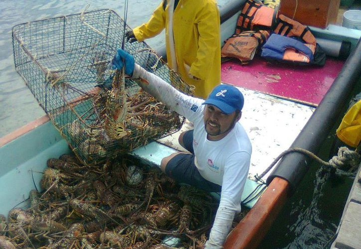 Los pescadores de Punta Allen esperan tener una buena temporada de captura de langosta este año. (Sara Cauich/SIPSE)