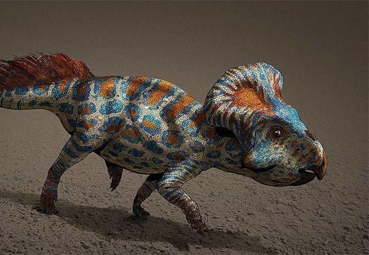Los cuernos ayudaban a los protoceratops, pequeños dinosaurios del tamaño de una oveja a encontrar pareja. (Wikipedia / AntoninJury)