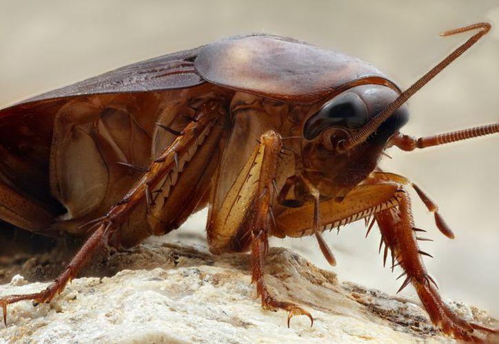 Miami padece la peor infestación de cucarachas en Estados Unidos. (Foto: Contexto)