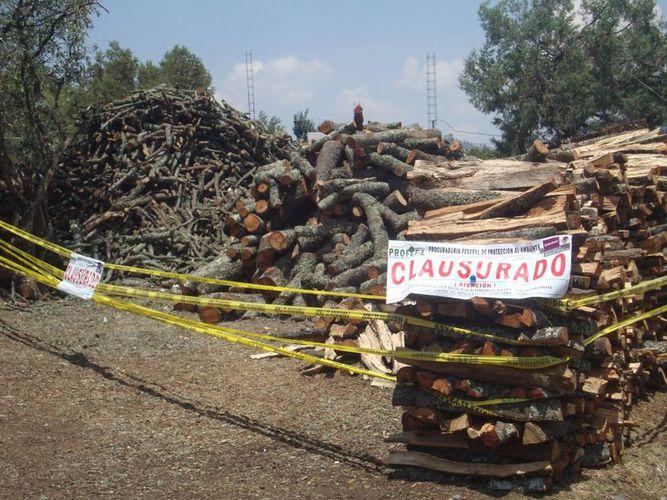 Resultado de imagen para tala de arboles en mexico