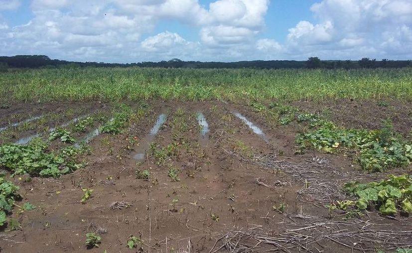En Morelos no tuvieron ninguna afectación de las lluvias de la tormenta, pero los escurrimiento año con año son los que los afectan. (Alejandro Poot/SIPSE)