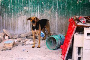 Los humanos 'trauman' a los perros que son agresivos: experto