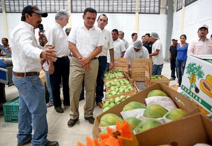 El Gobernador inauguró la empacadora Espita Farm y dio el banderazo de salida al primer embarque de tomate verde que llegará vía terrestre hasta la ciudad de Chicago, en Estados Unidos. (Cortesía)