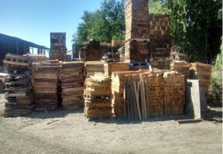 La madera decomisada fue retenida en el mismo sitio donde fue localizada en lo que se determina qué procede. (Facebook/Profepa)
