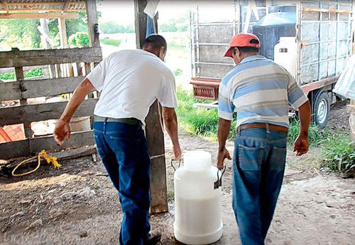 Sequía afecta a la producción de leche