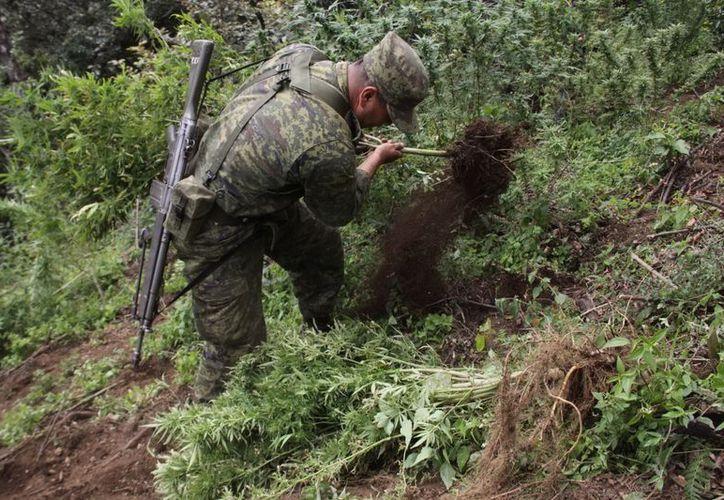 Soldados aseguraron un plantío mixto de amapola y marihuana en una extensión de 0.48 hectáreas. (Archivo/Notimex)