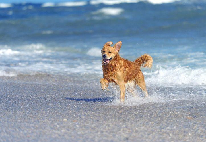Se estima que hay 30 mil perros callejeros en Othón P. Blanco. (Shutterstock)
