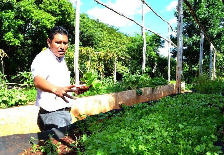 en mérida es difícil conseguir productos orgánicos, pues la mayoría de las personas dedicadas a este tipo de horticultura suelen radicar en los pueblos. (Milenio Novedades)
