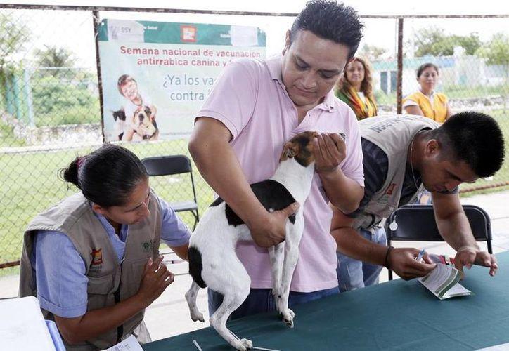 Vacunación a perros y gatos. (Milenio Novedades)