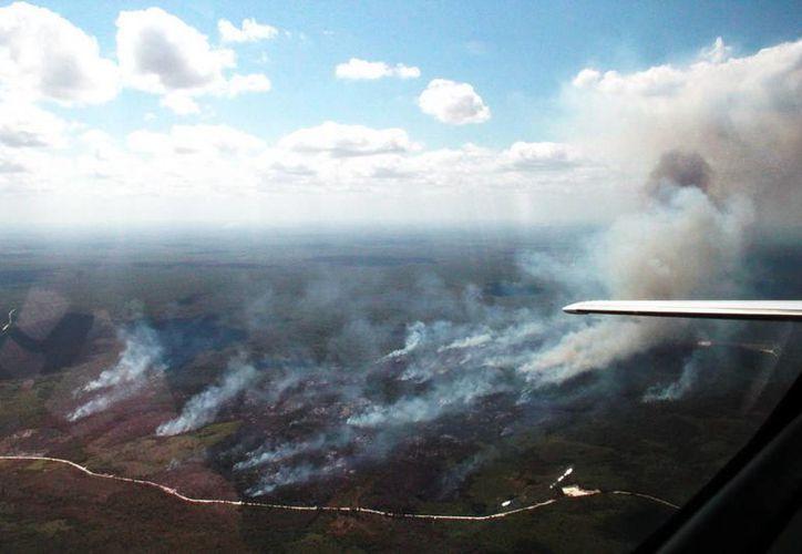 Los incendios forestales afectaron una superficie arbustiva  de 169 hectáreas en total. (Redacción/SIPSE)