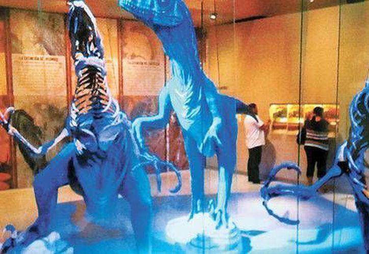 En el estudio de Chicxulub participaron geofísicos, geólogos, paleontólogos, astrónomos y especialistas en ciencias planetarias. (Milenio)