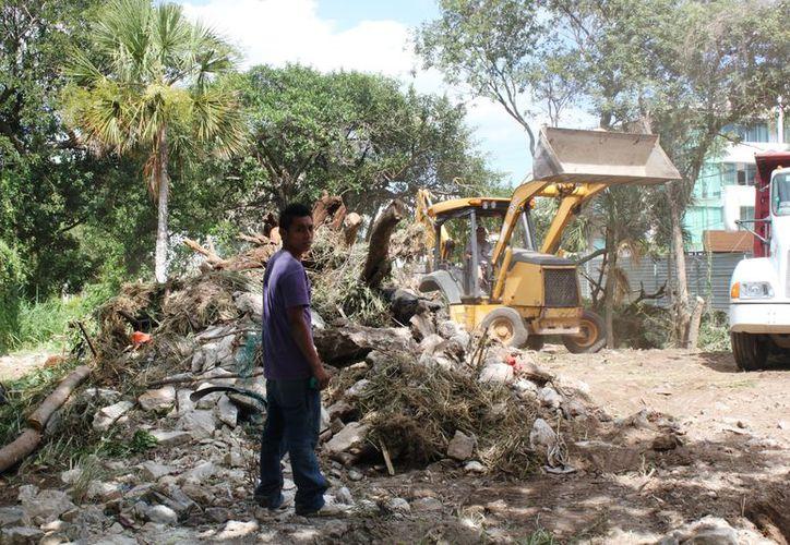 El 80% de los desarrollos constructivos en Solidaridad decide arrasar con la vegetación y árboles. (Foto: Daniel Pacheco)