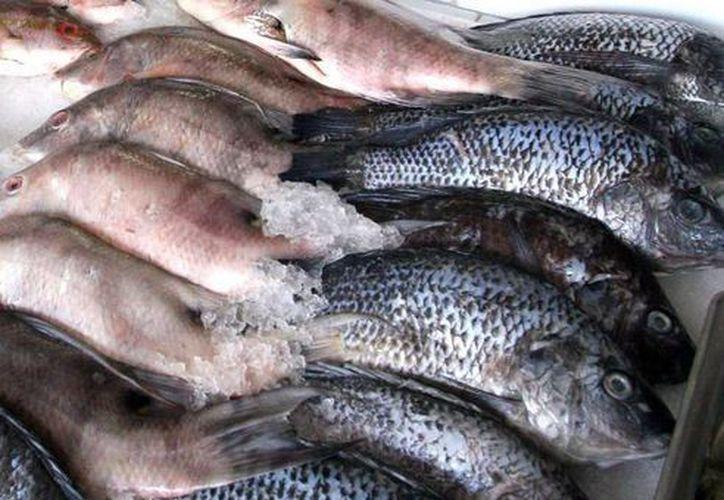 La dependencia ha verificado 13 congeladoras, 71 pescaderías, 320 restaurantes, 34 tiendas de autoservicio y 68 coctelerías. (Redacción/SIPSE)