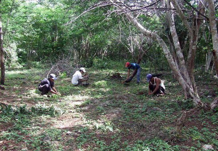 La Semarnat autorizó a Yucatán una primera partida para aplicar en los municipios de la Cruzada Nacional Contra el Hambre, Mérida y Tadhziú. (SIPSE)