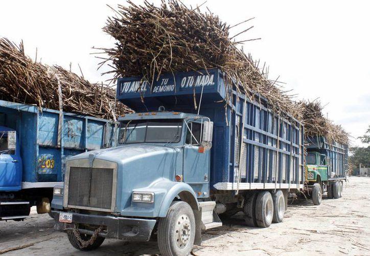 La intención es establecer cerca de 15 mil hectáreas de cultivo de caña de azúcar para alimentar la nueva planta industrial. (Archivo/SIPSE)