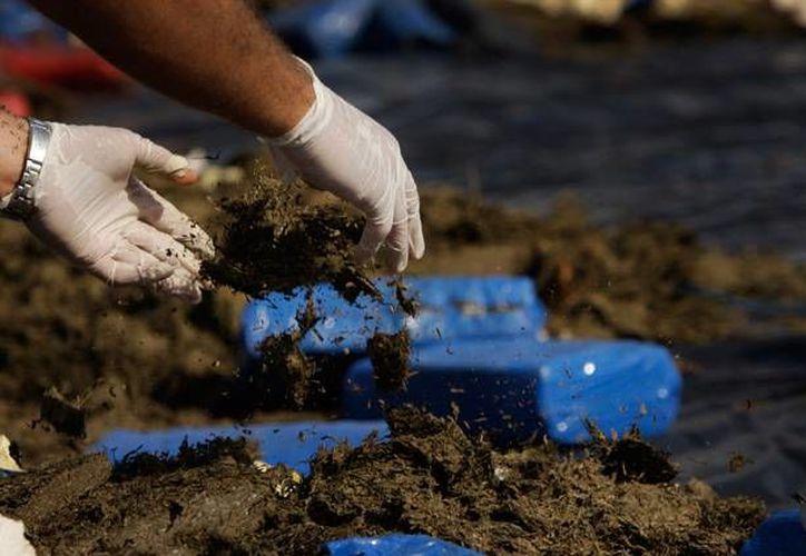 El cargamento de marihuana encontrado en Reynosa quedó a disposición del Ministerio Público de la Federación. (Archivo/AP)