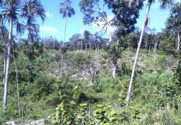 Inspectores federales de la Delegación de Profepa constataron afectación a vegetación forestal. (Ángel Castilla/SIPSE)