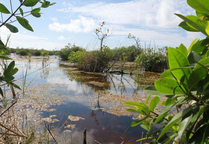 El Parque Arrecife de Puerto Morelos tiene la nominación internacional como sitio Ramsar. (Foto: Eva Murillo / SIPSE)