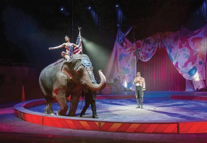 Acto con un elefante correspondiente a un show del  Ringling Brothers and Barnum & Bailey Circus, que deberá prescindir de los enormes mamíferos. (Foto: AP)