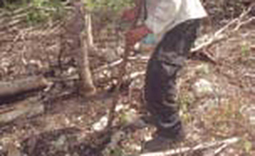 Los agricultores afirman que el suelo tiene la humedad suficiente para germinar sus semillas, pero no para que crezcan. (Javier Ortiz/SIPSE)