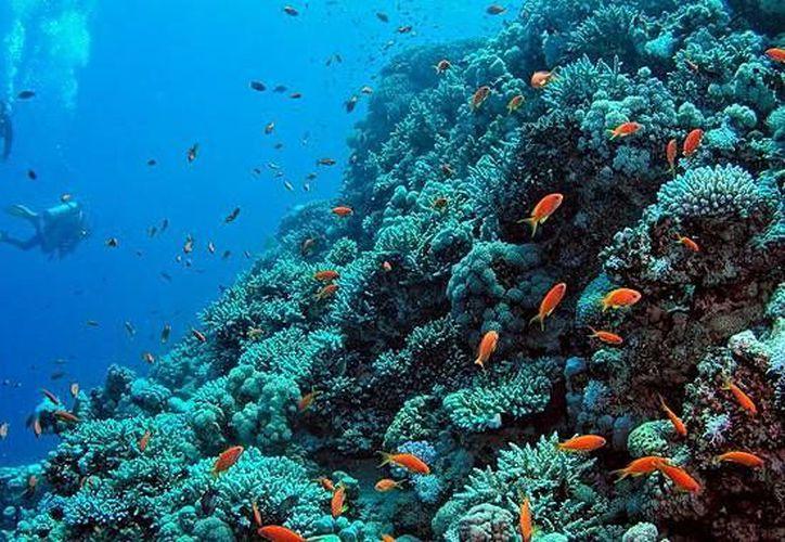 La mejor manera de cuidar la riqueza oceánica es conociéndola. Esta es al principal idea del Festival de los Océanos. (Contexto/Internet)