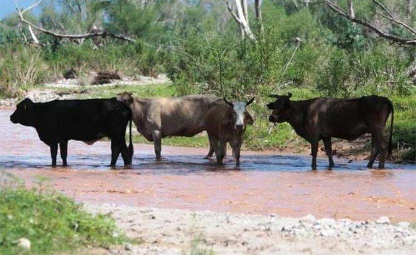 El gobierno de Sonora rompió relaciones con la mina de Cananea por sus 'acciones criminales'; el derrame afectó a más de 23 mil sonorenses. (Archivo/Excélsior)
