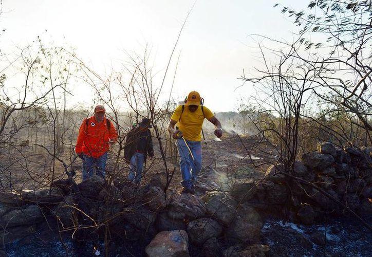 El año pasado hubo una reducción de incendios respecto a 2013. En la imagen, un grupo de trabajadores sofoca el incendio en la maleza. (Milenio Novedades)