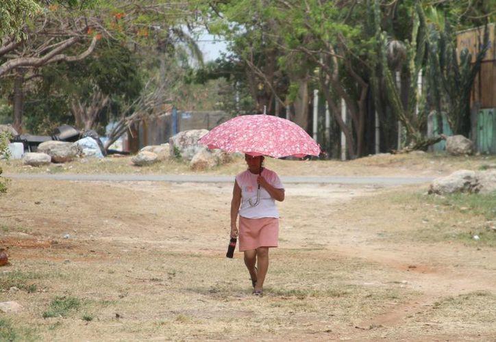 El pasado 26 de abril, las estaciones Motul, Mocochá y Chocholá detectaron temperaturas máximas de 44 grados Celsius. (Milenio Novedades)