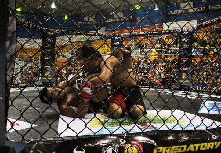 Más de 100 peleadores de varios municipios de Quintana Roo estarán en el Tercer Torneo Amateur. (Raúl Caballero/SIPSE)
