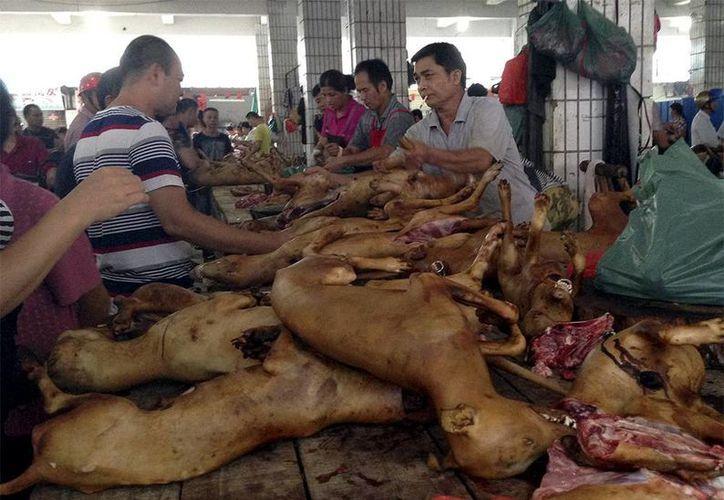 Masacre de perros se realiza en un festival en China. El gobierno negó su participación en el evento. (Excelsior)
