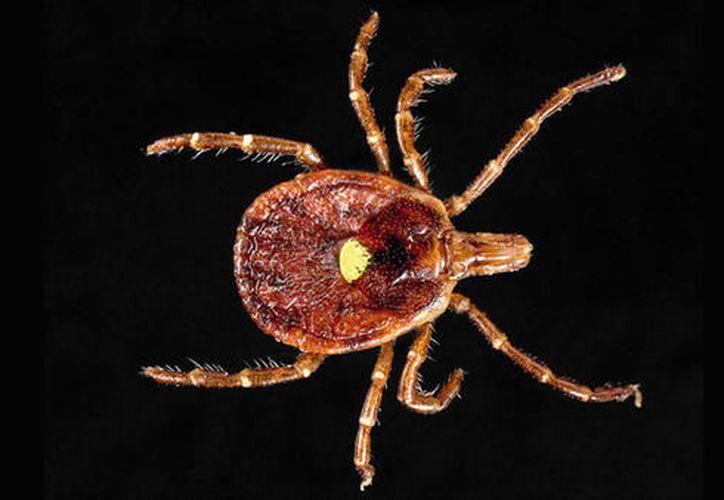 Su principal 'ataque' lo hace en el sistema inmunológico, que crea anticuerpos para combatirla. (Foto: QUO).
