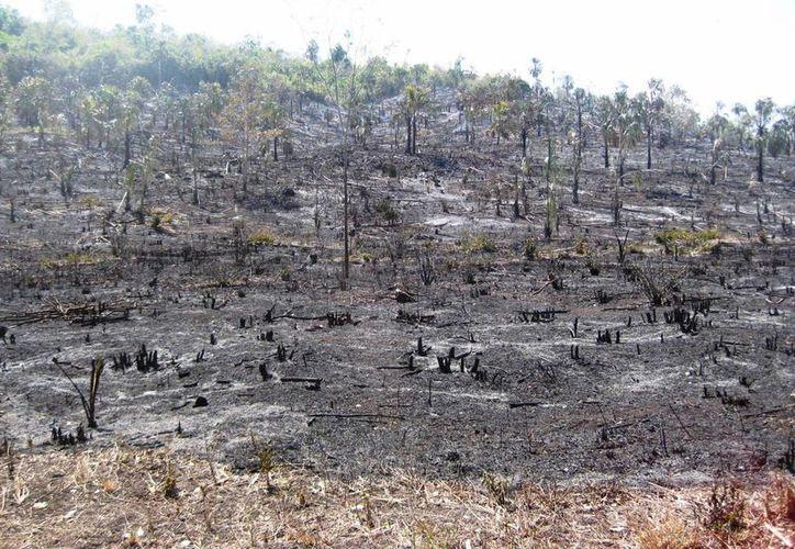 Los incendios en Bacalar han consumido varias hectáreas de vegetación arbustiva. (Javier Ortiz/SIPSE)