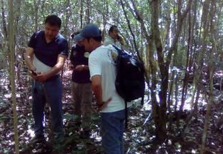La Procuraduría realizó un recorrido en la zona de vegetación donde se presume que el animal silvestre circula. (Redacción)