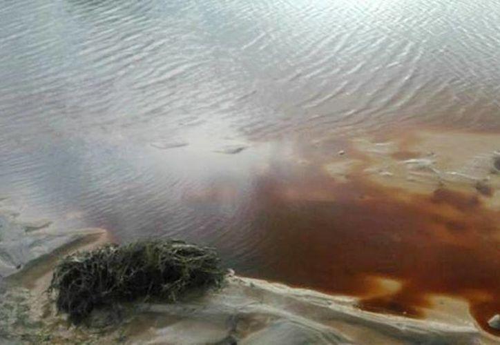 Habitantes de la ribera del río reportaron la muerte de peces y ganado por el derrame de ácido sulfúrico. (elimparcial.com)
