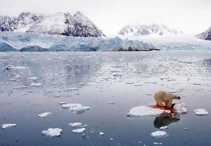 Calentamiento del Ártico podría tener un efecto 'catastrófico'