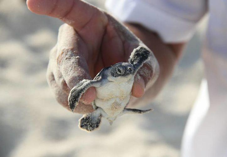 A través de las redes sociales se pueden realizar donaciones para la conservación de la especie. (Tomás Álvarez/SIPSE)