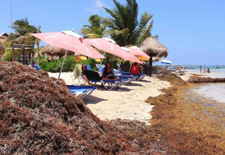El comité científico investigará las causas de la llegada atípica de sargazo a las playas de Quintana Roo. (Gerardo Amaro/SIPSE)