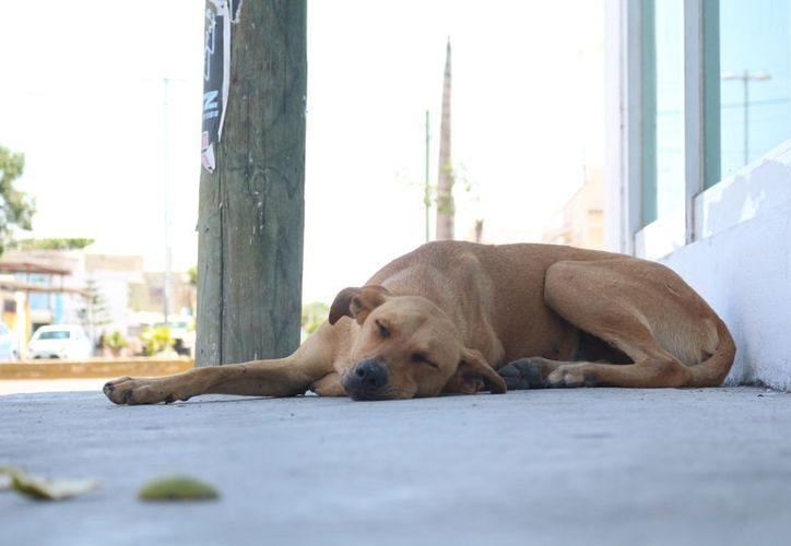Acción Animal llevará algunos perros de los 60 que tienen en el refugio para ser adoptados. (Foto: Adrián Barreto)